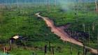 Desmatamento diminuiu, mas prática ainda acontece na floresta (ABr)