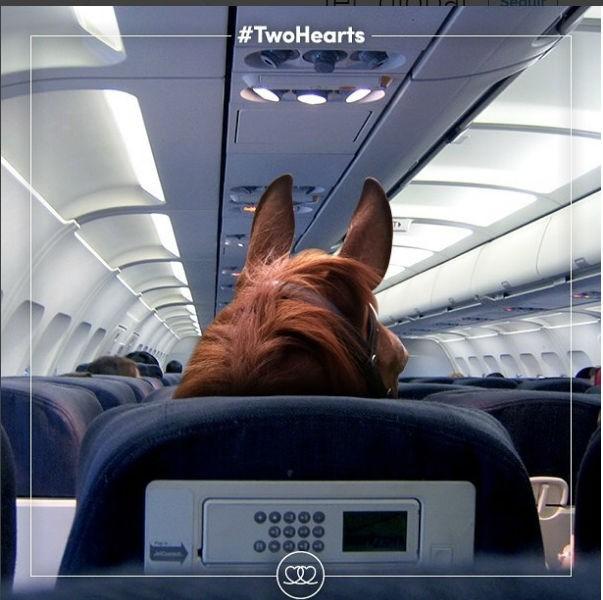Cavalos terão voo e tratamento vip durante viagem ao Rio de Janeiro  (Foto: Reprodução/ Instagram)