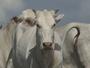 Senar oferece cursos gratuitos na internet para trabalhadores rurais