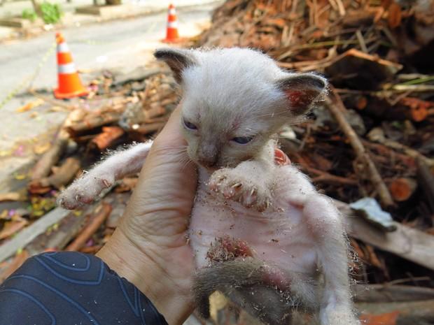 Felinos estavam dentro de árvore que caiu na Lagoa (Foto: Flávia Trindade / Vc no G1)