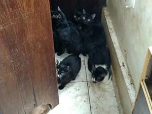 Policiais da Delegacia de Proteção ao Meio Ambiente retiraram os gatos (Foto: Divulgação/Polícia Civil)