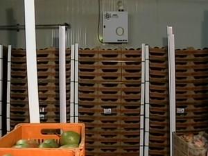 Para conservar as mangas, o gás é utilizado em câmaras frias (Foto: Reprodução/ TV Grande Rio)