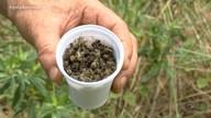 Polícia investiga causa do alto número de morte das abelhas registrado
