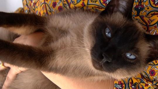 'Rio Sul Revista' conversou com quem entende de gatos
