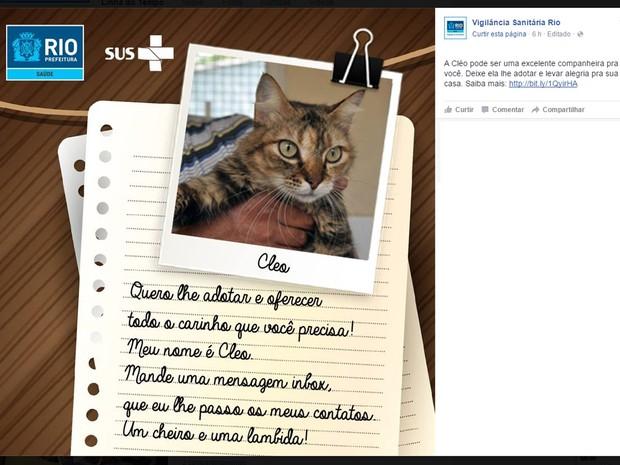 Cães e gatos que aguardam adoção passaram por tratamento veterinário e estão com vacinas em dia (Foto: Reprodução / Facebook)
