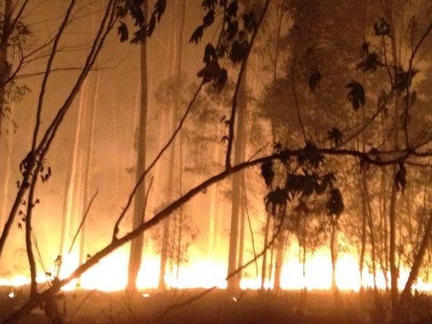 Incêndio atingiu plantação de pinos em Bauru (Foto: Fábio Leopissi / TV TEM)