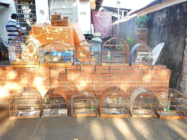 Gaiolas onde os passáros eram mantidos em cativeiro  (Foto: Divulgação / Polícia Ambiental )
