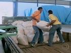 Em PE, programa da Conab vende milho mais barato
