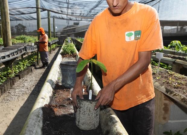 Detento trabalha com produção de muda de planta em São Paulo (Foto: Divulgação/Florestas Inteligentes)