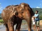 Jayme Matarazzo dá banho em elefantes durante lua de mel