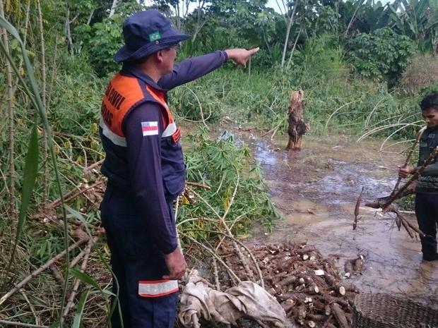 Produção de mandioca foi inundada pelo rio em Guajará no início deste mês (Foto: Divulgação/Defesa Civil)