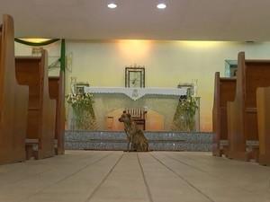 Cachorro é conhecido na igreja (Foto: Reprodução / TV TEM)