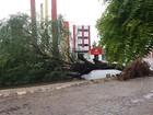 Sertão de PE tem chuva, queda de árvores e acúmulo nos reservatórios