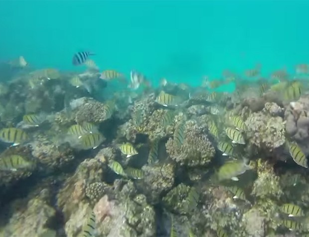 Câmera em avião de controle remoto acabou registrando imagens impressionantes embaixo d'água (Foto: Reprodução/YouTube/MrLiftHog)