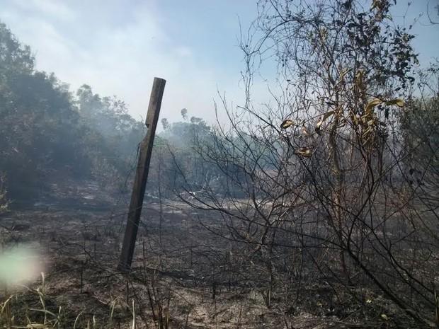 Área queimada pelo incêndio (Foto: Serli Santos/ TV Gazeta)