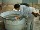 Casos confirmados de dengue aumentam em Guajará, diz Nuvepa