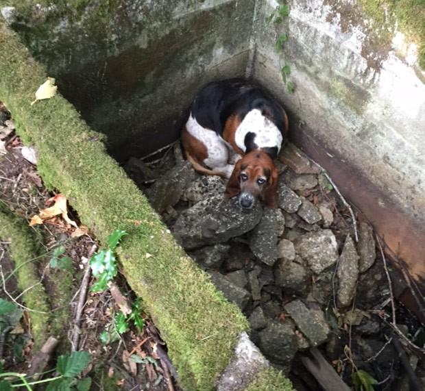 Phoebe havia caído em um buraco em Vashon, no estado de Washington (Foto: Amy Carey/Vashon Island Pet Protectors/AP)