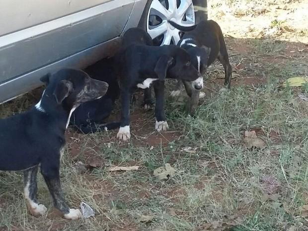 Cadela e filhotes foram levados por familiar do susposto dono dos animais  (Foto: Divulgação/ ONG Patinhas Carentes)