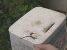 Vigilância dá dicas para eliminar criadouros do Aedes aegypti
