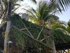 Turistas de GO caem de sacada no Litoral do Piauí e precisam de sangue