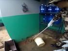 Jararaca de 1 m é encontrada em distribuidora de Sobradinho II, no DF