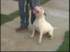 Cães podem reagir de forma violenta ao barulho excessivo, diz veterinário