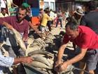 Pesca da tainha chega a 5,6 toneladas nas primeiras horas de safra em SC