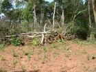 PMA autua pecuarista de MS em R$ 12 mil por desmatamento ilegal