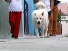 Cão segue passos de dono morto há um ano em Caçapava do Sul, no RS