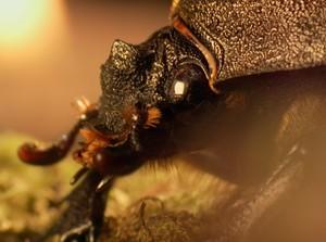Besouro enfrenta desafios na noite de Tóquio (rede globo)