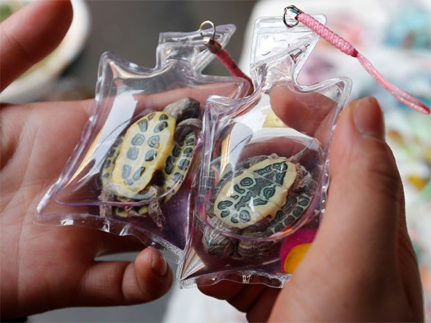 Animais vivos em embalagens de plástico (Foto: Reuters/Kim Kyung Hoon)
