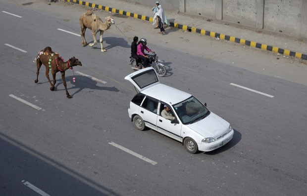 Paquistaneses puxam dromedários com carro e moto em estrada em Lahore. (Foto: Mohsin Raza/Reuters)