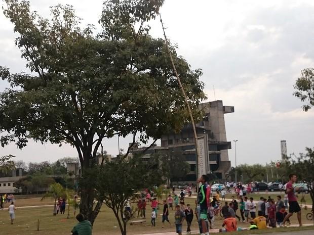 Garoto tenta retirar pipa da copa de uma árvore em praça de Sorocaba (Foto: Amanda Campos/G1)