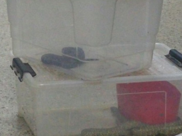 Polícia resgata 33 animais silvestres dentro de quitinete, em Goiás (Foto: Mariana Pinheiro/TV Anhanguera)
