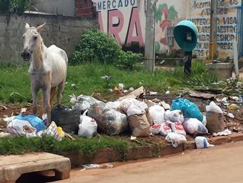 Cavalo comendo lixo jogado em rua residencial no Setor Sol Nascente (Foto: Isabella Formiga/G1)
