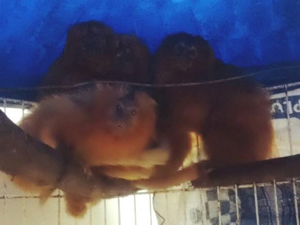 Animais foram encontrados em canil irregular (Foto: PM/Divulgação)