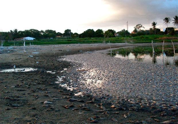 Gestor ambiental acredita que a seca na região causou alto teor de sal na água, matando as tilápias  (Foto: Eliabe Alves)