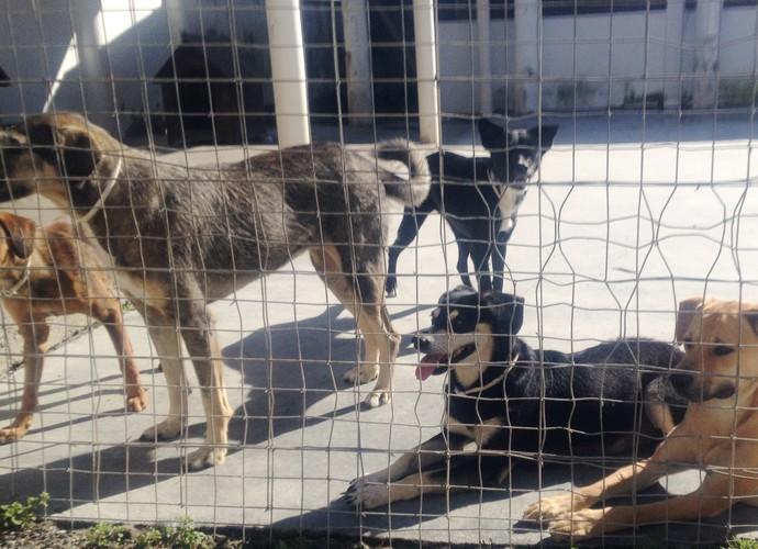 Amantes dos cachorros não podem perder as dicas do Mistura (Foto: RBS TV/Divulgação)