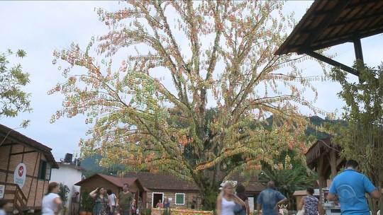 Árvore de Páscoa de Pomerode, SC, é reconhecida como maior do mundo