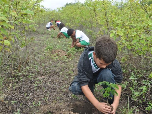 Canteiros sustentáveis são produzidos por crianças em Campina Grande (Foto: Paulo da Silva Santos)