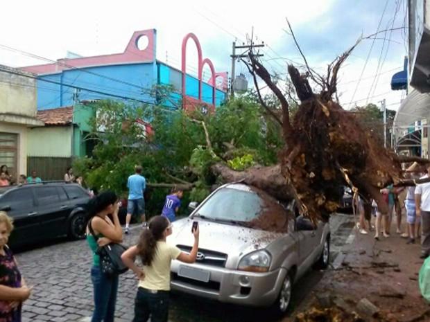Chuva com ventos fortes provoca queda de árvores em Atibaia, SP (Foto: Lucas Rangel/ TV Vanguarda)