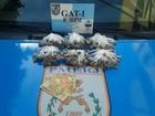 PM apreende 300 buchas de maconha e detém dois jovens em Campos, RJ