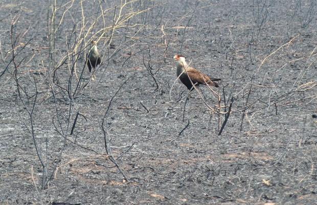 Incêndio em fazenda na região oeste da Bahia (Foto: Ivan Rodrigo/Blog do Braga)