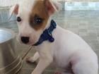 Jovem se revolta ao adotar cão e encontrar sujeira em canil de MS