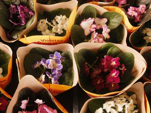 Evento será no Ponto de Cem Réis, e segundo a organização, mais de 200 tipos de flores serão comercializadas a preços populares (Foto: Adino Bandeira/Assessoria)