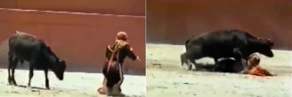 Toureira passa aperto com animal em arena espanhola