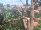 Três cidades do PI ficam sem energia por causa de corte irregular de árvore