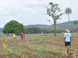 Famílias indígenas plantam em área da fazenda Buriti, em Sidrolândia, MS. (Foto: Gabriela Pavão/ G1 MS)