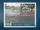 Chuva provoca alagamentos e queda de árvores em cidades da região; veja