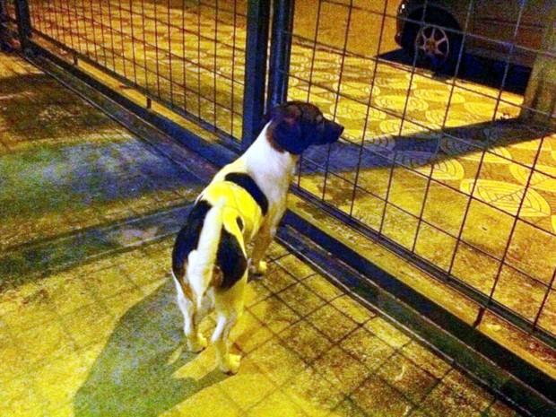 Cadela foi resgatada em Sorocaba (Foto: Bruna Assaf/Arquivo Pessoal)
